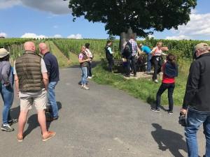 Weinreise Sommerach - Wanderung durch den Weinberg